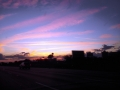 _Sunset Orlando Wed 1-25-12 why i called merri and she came the next day for pga show