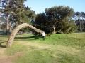 _Merri 3 Tree 6-14-12