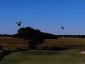 _2 Green Birds in Flight 11-3-18