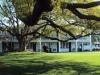3-640-ch-oak-tree