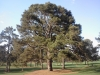 eisenhower-tree-on-no-17