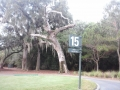 _Tree 15T