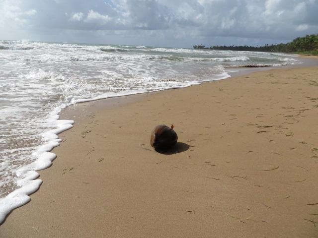 beach-coconut
