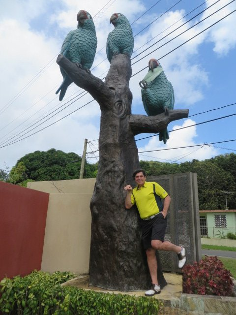 rio-andy-w-parrots
