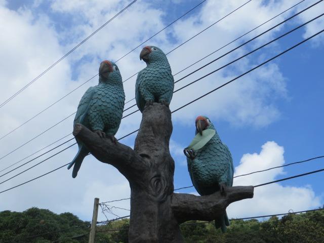 rio-parrots-close-up