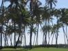 palmas-del-mar