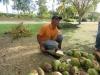 worker-machette-coconuts