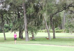 Merri enjoying the company of three deer off the 9th tee on the Pine Lakes Course!