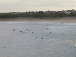 Surfers, not seals, in the water at Maroubra Beach.