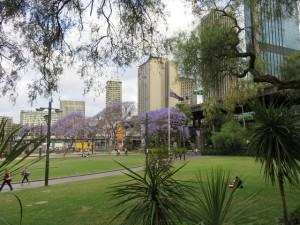 Springtime in Sydney...
