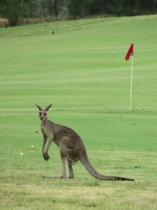 I suspect some of my Australian followers will be out early in the morning to see me play. FORE Joey Roo!
