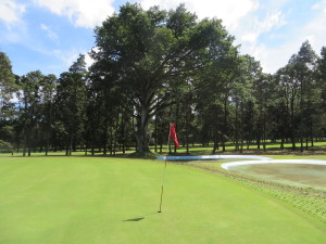 My favorite hole (because of my deuce), the par-3 2nd with the national Ceiba tree guarding the green.