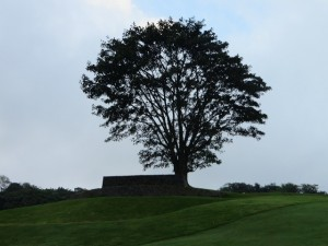 There are volcanoes, love grass and the majestic tree on the 13th fairway at La Reunion!