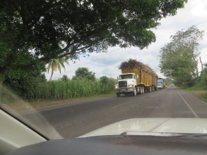 At first I thought these trucks were carrying sticks but then I realized it was harvested sugar cane.