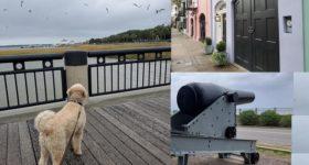 A Winter's Walk around Charleston, South Carolina with my Grand Puppy Blue Bear!
